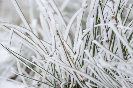 grass covered in snow
