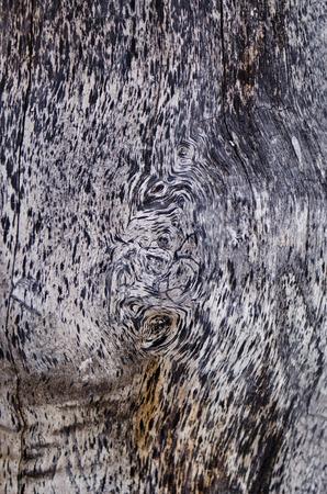 tigre: wood pattern Stock Photo