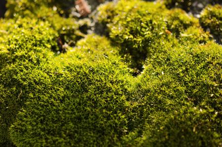islets: islets moss Stock Photo