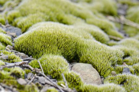 subtlety: moss on rocks