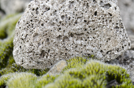 gentleness: porous stone and moss