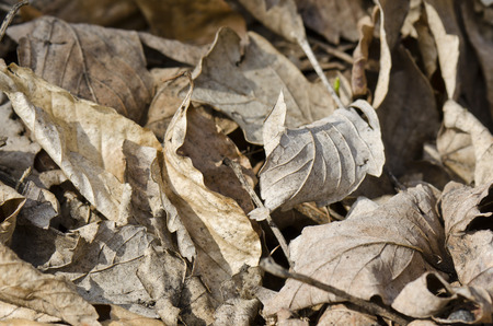 veining: dry leaves on the ground