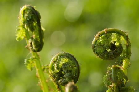 coiled: coiled fern leaf