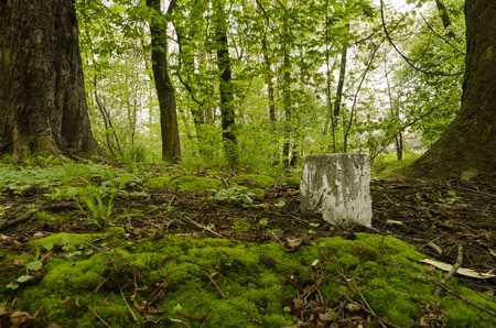 boundary: boundary stone in the forest Stock Photo