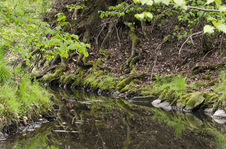 flowing river: flowing river in the forest