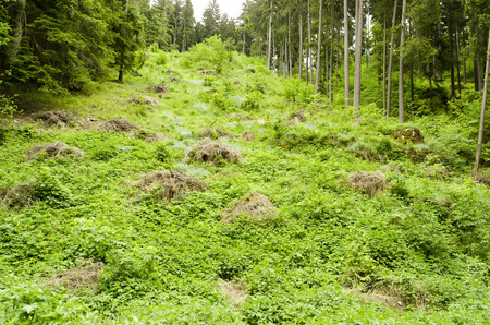 deforested: deforested hillside in the woods