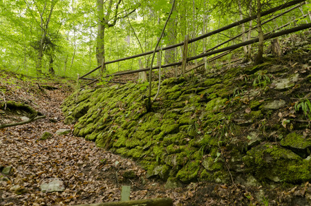 forest trail: stone wall and forest trail