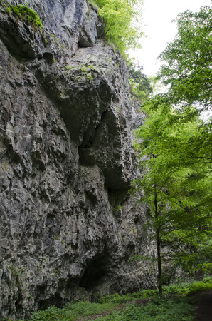 perpendicular: perpendicular rock in the woods