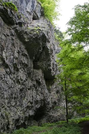 perpendicular: roccia perpendicolare nel bosco