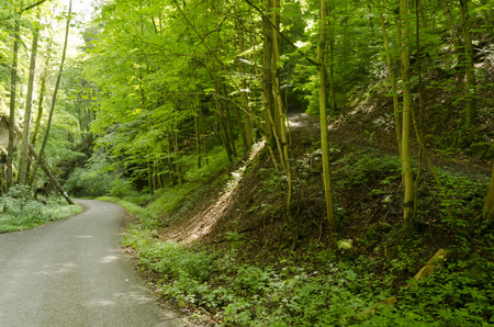 road and path through: asphalt road through the forest and the path leading to the woods