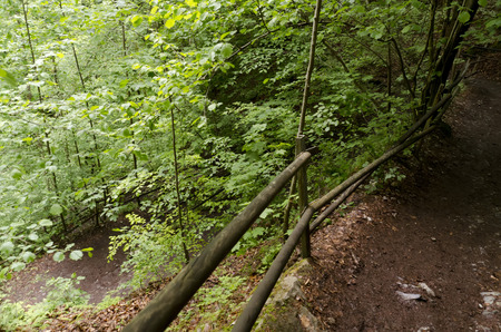 forest trail: Forest trail with handrails