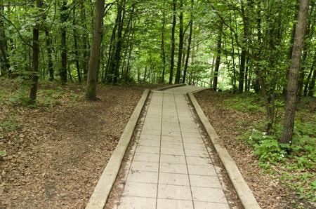 bajando escaleras: pavimento de baldosas termin� por las escaleras en el bosque