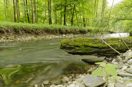 river trunk: River in the forest with rocky shore and trunk
