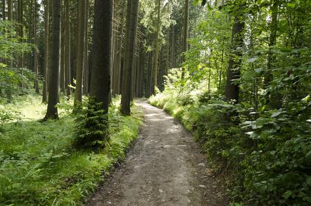 森の中で岩の歩道