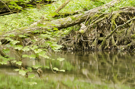 trembling: flowing river and Trembling leaves in the wind Stock Photo