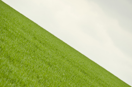 sloping: green corn and cloudy skies sloping