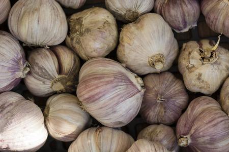 fall protection: Several garlic buds