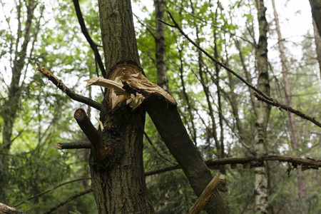 natural force: broken branch from a tree trunk Stock Photo