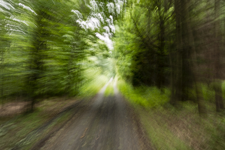 tunnel view: speeding forest after forest road Stock Photo