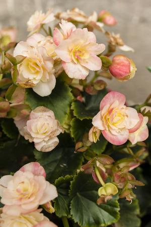 gentleness: pink flowers