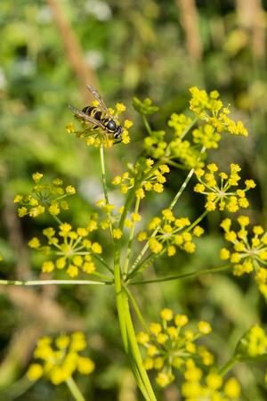 flowering plants: Wasp on flowering plants