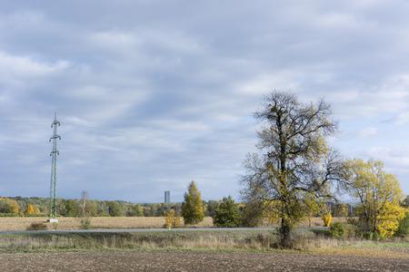 empedrado: Campo, camino pavimentado, �rbol sin hojas y el campo el�ctrico
