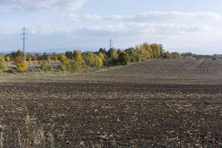 avenues: field fields after harvest and avenues of trees in the background Stock Photo