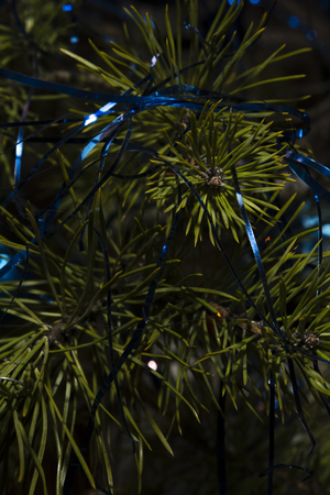pine needles: Christmas pine needles with blue tassels Stock Photo