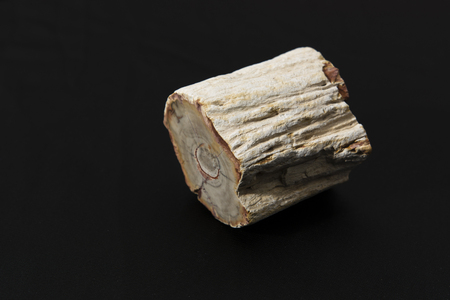 fossilized: fossilized prehistoric tree trunk Stock Photo