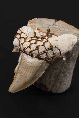 fossilized: large fossilized shark tooth wrapped wire to hang in the background fossilized trunk Stock Photo