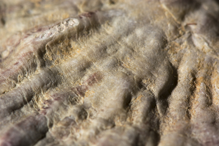 fossilized: fossilized coral from the seabed at a macro perspective Stock Photo
