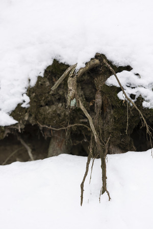 peppered: snowy slope root sticking out of the snow