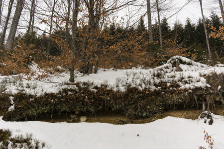 mud snow: Escarpment with tree roots and mud, snow in the woods - Department of Soil