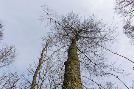 without: look into the tree without leaves in spring