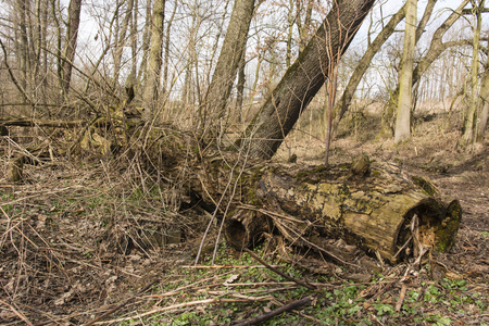 decaying: Old and Decaying fallen tree trunk in the forest Stock Photo