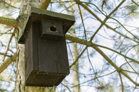 square box: square box for birds on pine Stock Photo