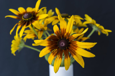 arnica: Arnica flowers in a vase.