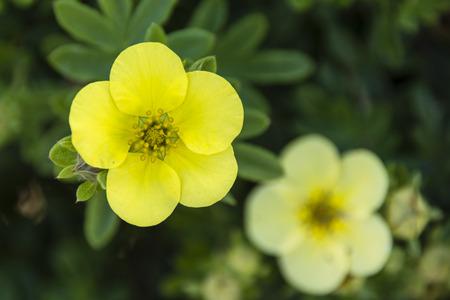 gentleness: Yellow flowers hedge.