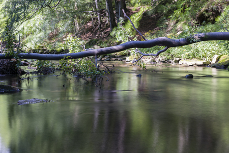 fallen tree: River with fallen tree above it. Stock Photo