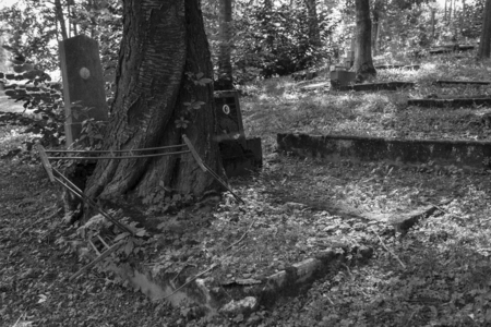 empty tomb: Old grave with a tree growing out of the grave. Stock Photo