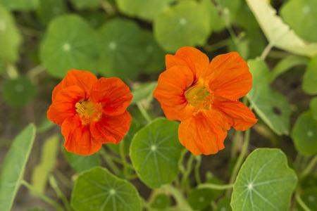 Oranje bloemen.