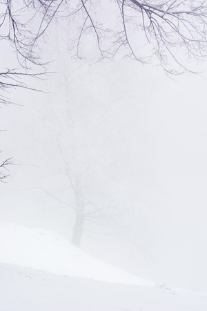 Snowy tree in fog on a hill in the snow. Stock Photo
