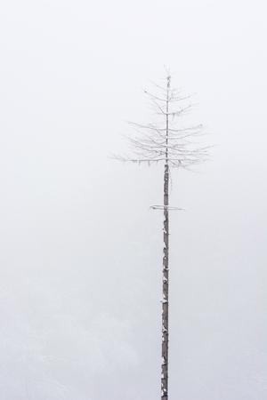 forgotten: The Forgotten snowy tree Maddy. Stock Photo