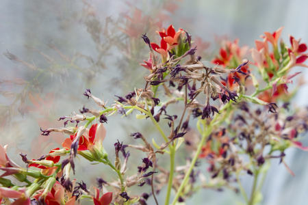 withering: Withering flowers with red flowers. Stock Photo