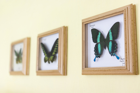 butterflies for decorations: Butterflies in frames on the wall. Stock Photo