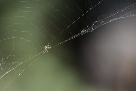 quivering: Quivering spider on the web.