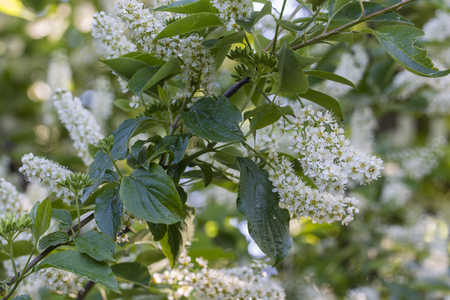 White blooming flowers.