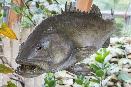 Big plastic fish.