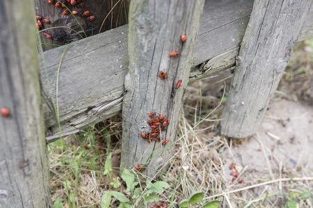 Plateaux rouges sur le bois. Banque d'images - 87010670