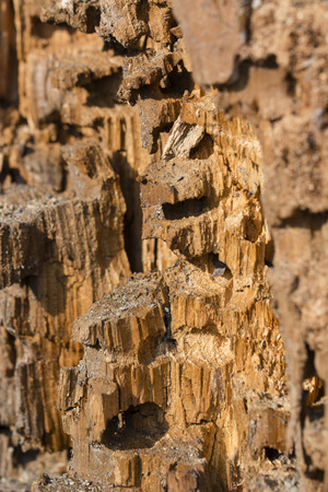 Detail view of damaged tree trunk from insect larvae.